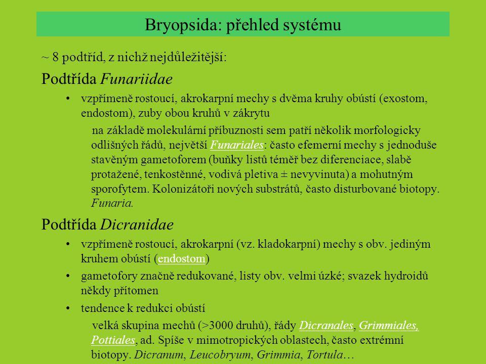 Bryopsida: přehled systému ~ 8 podtříd, z nichž nejdůležitější: Podtřída Funariidae vzpřímeně rostoucí, akrokarpní mechy s dvěma kruhy obústí (exostom
