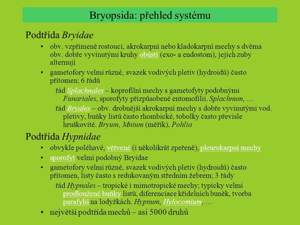 Bryopsida: přehled systému Podtřída Bryidae obv. vzpřímeně rostoucí, akrokarpní nebo kladokarpní mechy s dvěma obv. dobře vyvinutými kruhy obústí (exo
