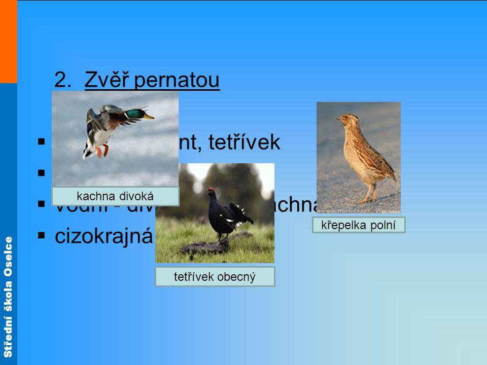 Střední škola Oselce 2. Zvěř pernatou  lesní - bažant, tetřívek  polní - koroptev  vodní - divoká husa, kachna  cizokrajná - pštros tetřívek obecn