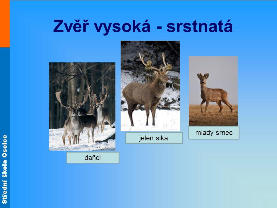 Střední škola Oselce Zvěř vysoká - srstnatá daňci mladý srnec jelen sika