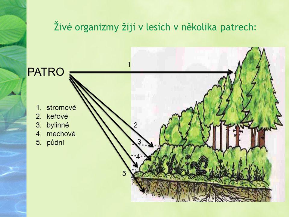 Živé organizmy žijí v lesích v několika patrech: PATRO 1 2 3 4.4. 5 1.stromové 2.keřové 3.bylinné 4.mechové 5.půdní