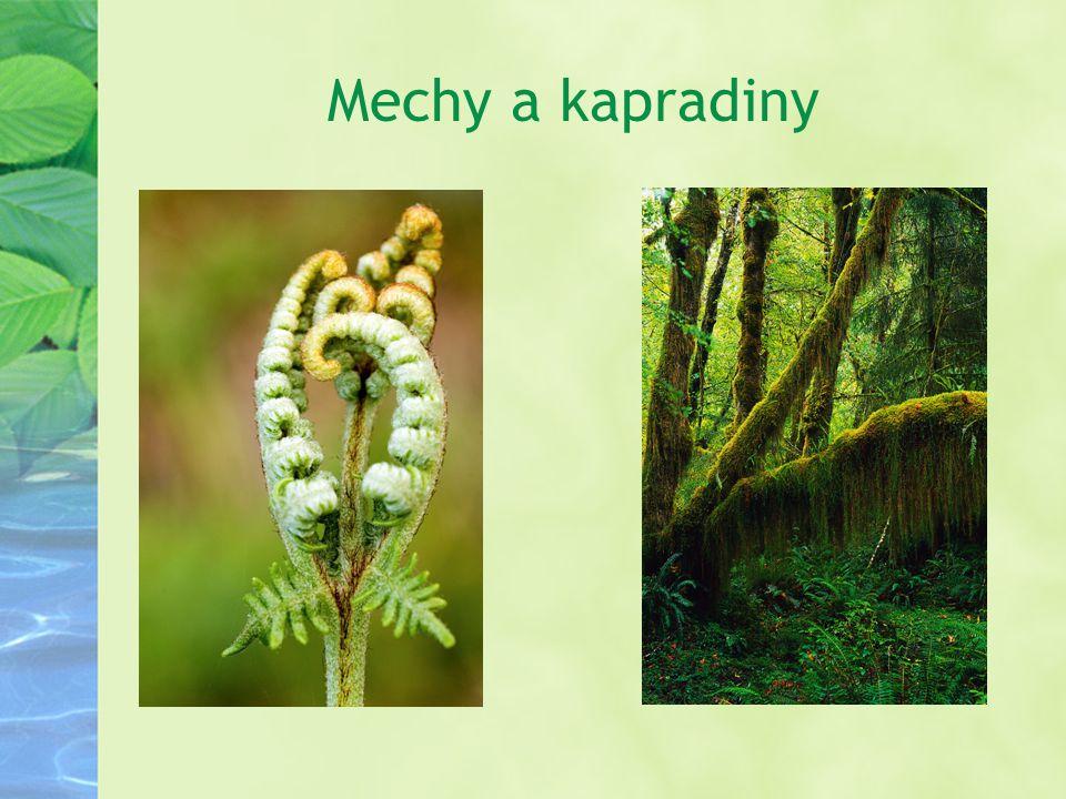 Mechy a kapradiny