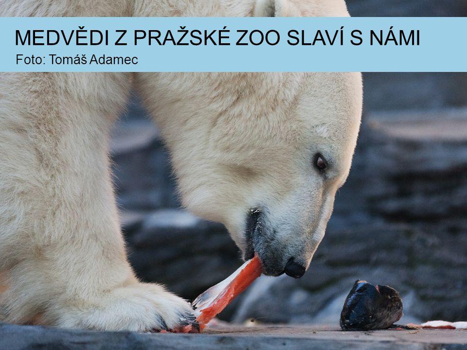 Foto: Tomáš Adamec MEDVĚDI Z PRAŽSKÉ ZOO SLAVÍ S NÁMI