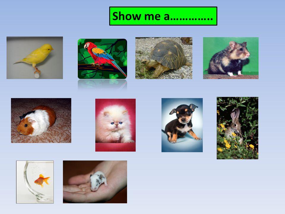 Show me a…………..