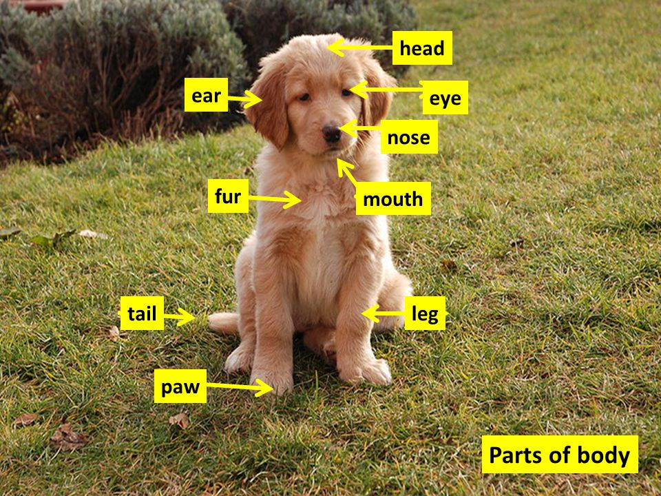 Parts of body ear fur tail paw leg nose eye head mouth