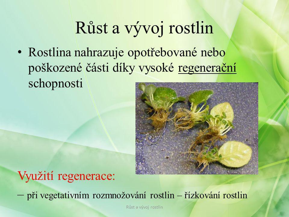 Rostlina nahrazuje opotřebované nebo poškozené části díky vysoké regenerační schopnosti Využití regenerace: – při vegetativním rozmnožování rostlin –