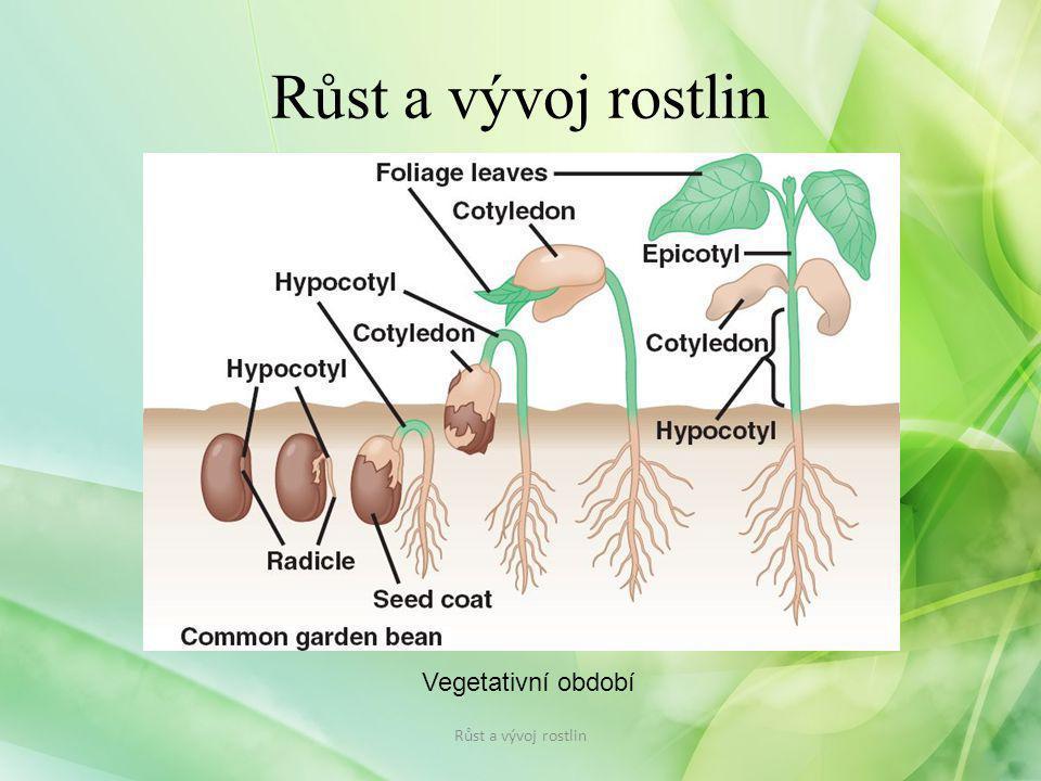 Vegetativní období Růst a vývoj rostlin