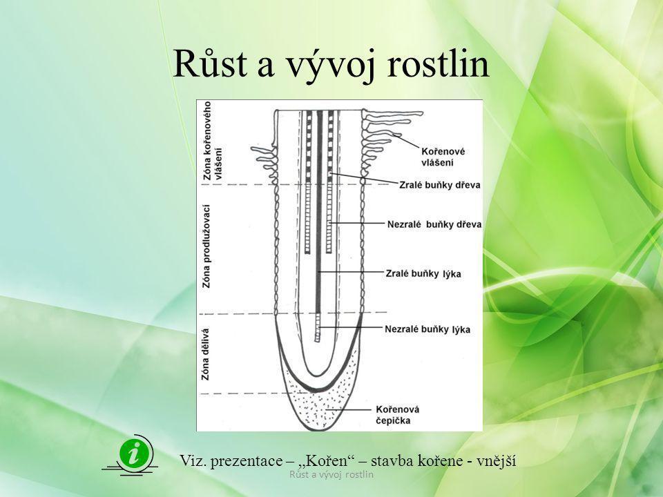 Faktory ovlivňující růst a vývoj rostlin Růst je ovlivněn vnějšími a vnitřními faktory: Vnější faktory růstu: – světlo – nutné pro tvorbu asimilátů při fotosyntéze rostliny bez světla netvoří mechanická pletina, jsou světlé, mají dlouhé lodyžní články takové rostliny se označují jako etiolované – klíčky na uskladněných bramborách, chřest..