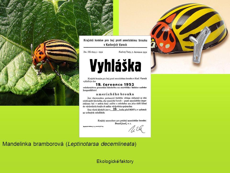 Ekologické faktory Mandelinka bramborová (Leptinotarsa decemlineata)