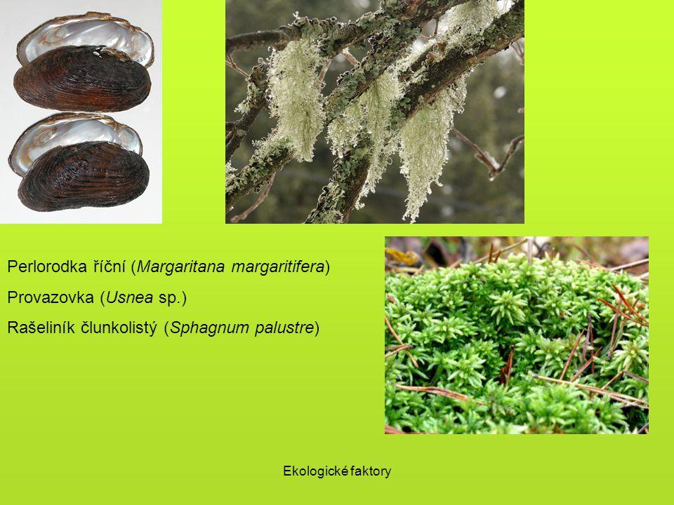 Ekologické faktory Perlorodka říční (Margaritana margaritifera) Provazovka (Usnea sp.) Rašeliník člunkolistý (Sphagnum palustre)