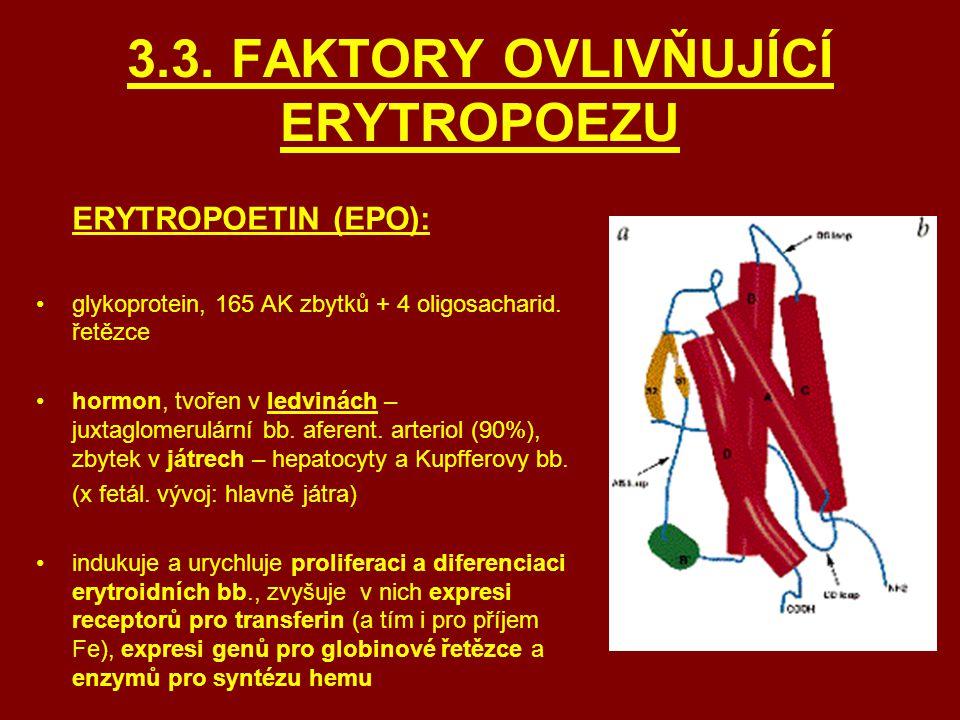 3.3. FAKTORY OVLIVŇUJÍCÍ ERYTROPOEZU ERYTROPOETIN (EPO): glykoprotein, 165 AK zbytků + 4 oligosacharid. řetězce hormon, tvořen v ledvinách – juxtaglom
