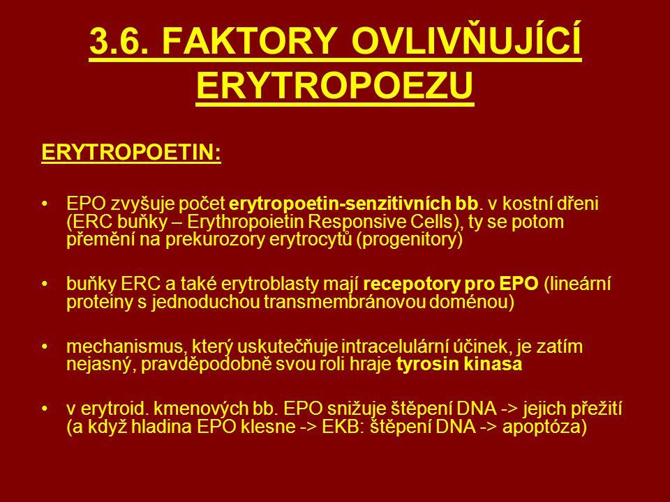 3.6. FAKTORY OVLIVŇUJÍCÍ ERYTROPOEZU ERYTROPOETIN: EPO zvyšuje počet erytropoetin-senzitivních bb. v kostní dřeni (ERC buňky – Erythropoietin Responsi