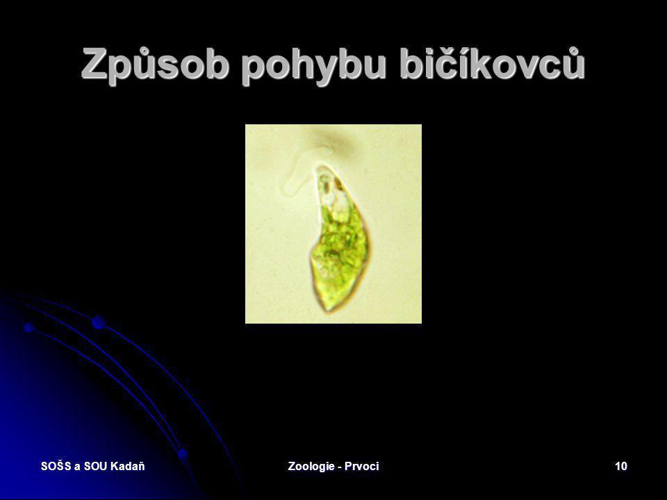 SOŠS a SOU KadaňZoologie - Prvoci9 Chloroplasty krásnoočka zeleného