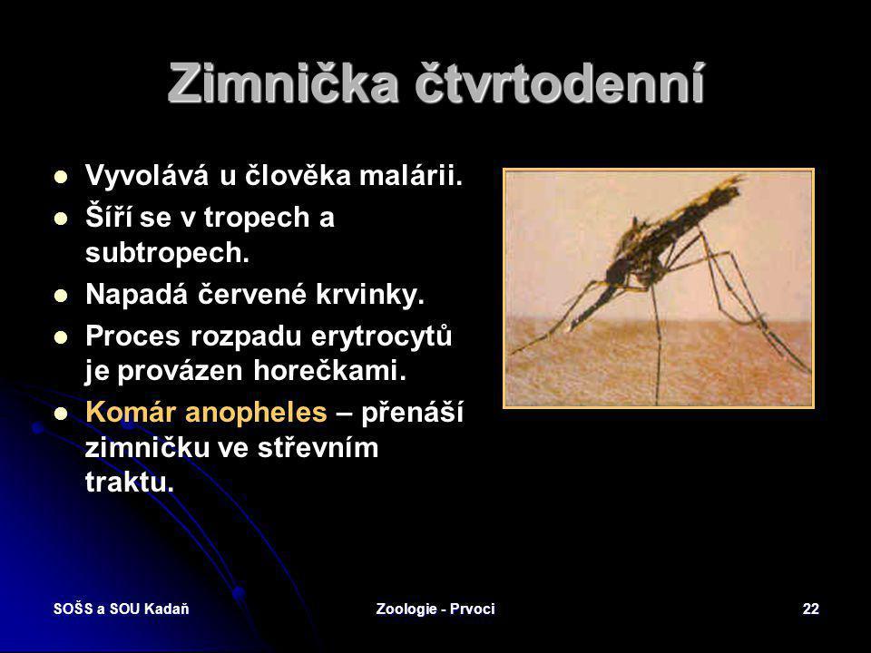 SOŠS a SOU KadaňZoologie - Prvoci21 Výtrusovci Paraziti bezobratlých živočichů i obratlovců Rozmnožují se výtrusy. Při rozmnožování se střídají genera