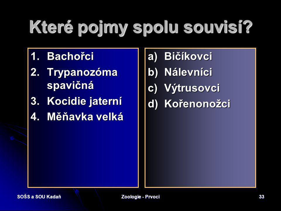 SOŠS a SOU KadaňZoologie - Prvoci32 Bachořci Žijí v bachořci a v tlustém střevě býložravců. Pomáhají svými fermenty trávit celulózu. V 1 ml žaludeční