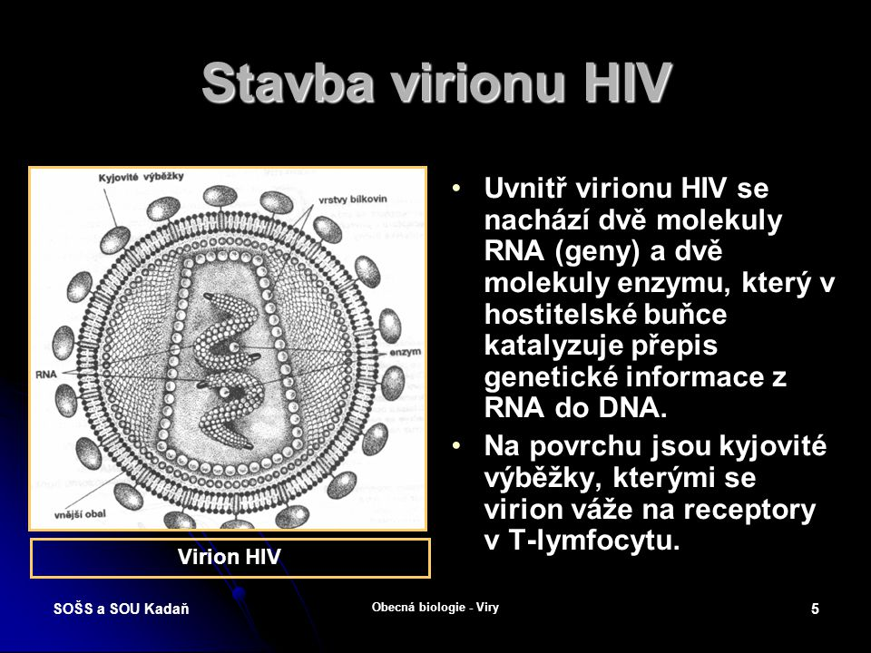 SOŠS a SOU Kadaň Obecná biologie - Viry 4 Stavba viru chřipky Virus chřipky obsahuje 8 segmentů RNA.