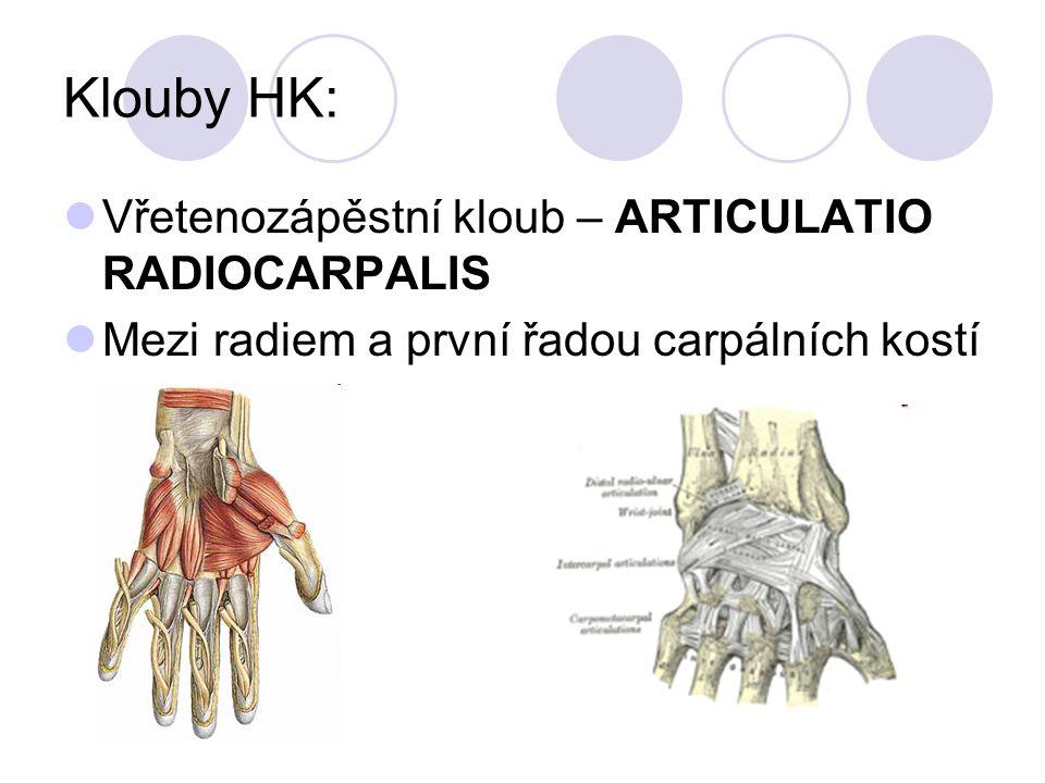 Klouby HK: Vřetenozápěstní kloub – ARTICULATIO RADIOCARPALIS Mezi radiem a první řadou carpálních kostí