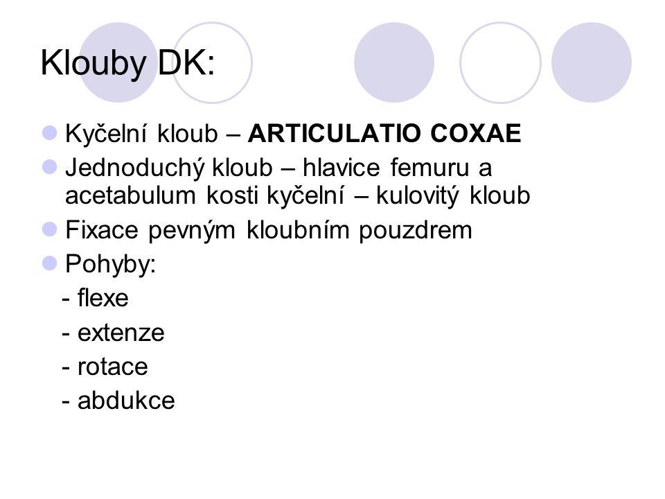 Klouby DK: Kyčelní kloub – ARTICULATIO COXAE Jednoduchý kloub – hlavice femuru a acetabulum kosti kyčelní – kulovitý kloub Fixace pevným kloubním pouz