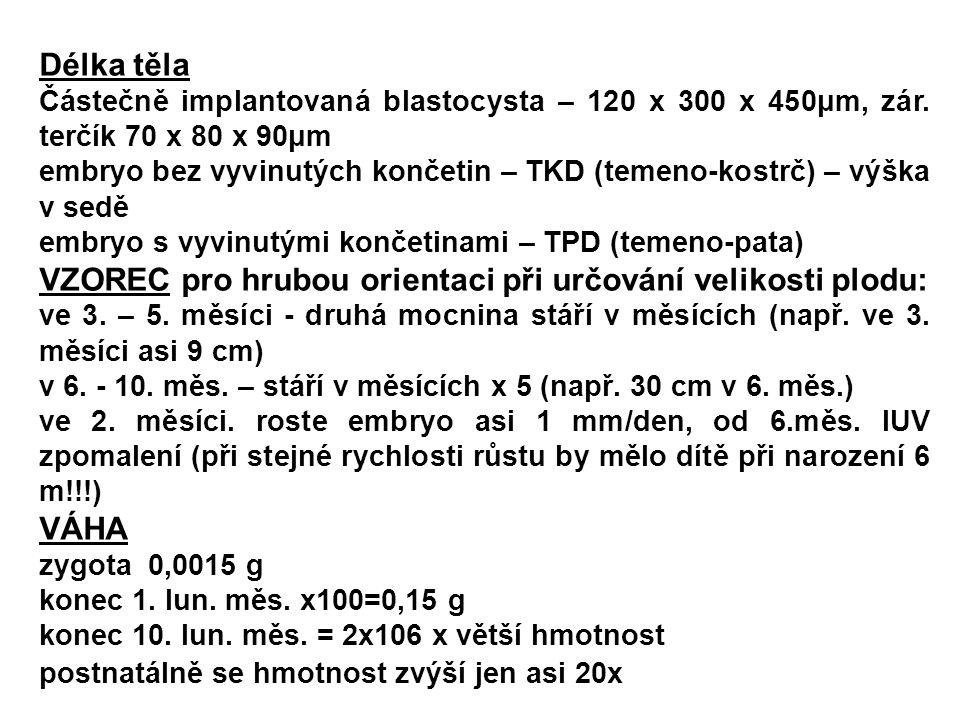 Délka těla Částečně implantovaná blastocysta – 120 x 300 x 450μm, zár. terčík 70 x 80 x 90μm embryo bez vyvinutých končetin – TKD (temeno-kostrč) – vý