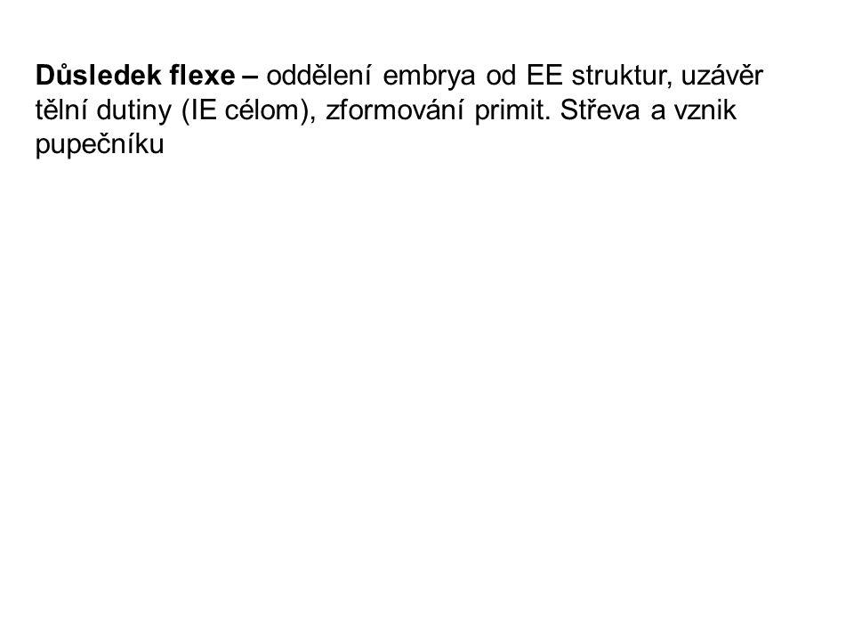 Důsledek flexe – oddělení embrya od EE struktur, uzávěr tělní dutiny (IE célom), zformování primit. Střeva a vznik pupečníku