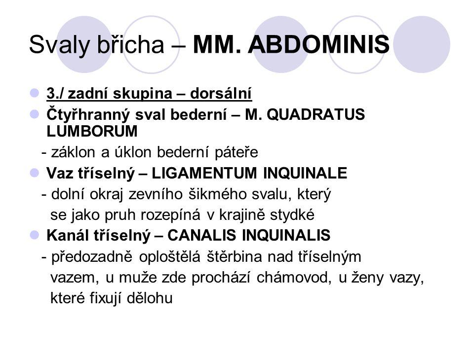 Svaly břicha – MM. ABDOMINIS 3./ zadní skupina – dorsální Čtyřhranný sval bederní – M. QUADRATUS LUMBORUM - záklon a úklon bederní páteře Vaz tříselný