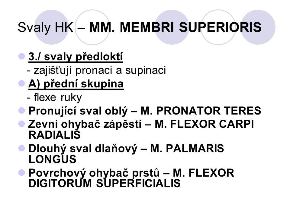 Svaly HK – MM. MEMBRI SUPERIORIS 3./ svaly předloktí - zajišťují pronaci a supinaci A) přední skupina - flexe ruky Pronující sval oblý – M. PRONATOR T