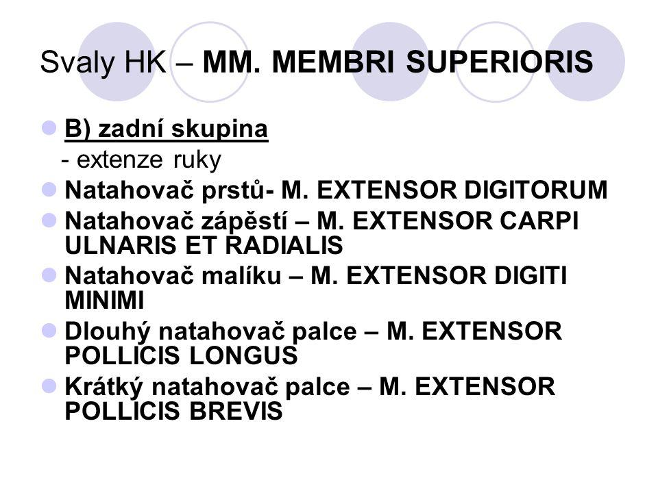 Svaly HK – MM. MEMBRI SUPERIORIS B) zadní skupina - extenze ruky Natahovač prstů- M. EXTENSOR DIGITORUM Natahovač zápěstí – M. EXTENSOR CARPI ULNARIS