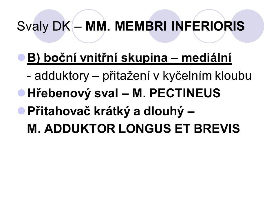 Svaly DK – MM. MEMBRI INFERIORIS B) boční vnitřní skupina – mediální - adduktory – přitažení v kyčelním kloubu Hřebenový sval – M. PECTINEUS Přitahova