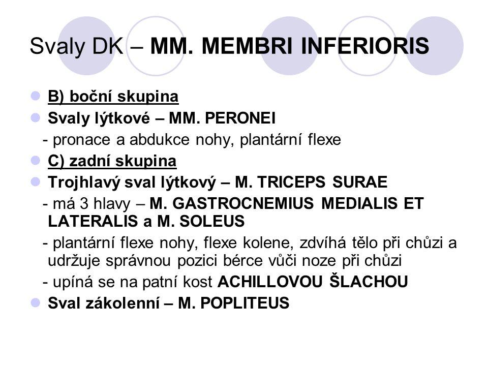 Svaly DK – MM. MEMBRI INFERIORIS B) boční skupina Svaly lýtkové – MM. PERONEI - pronace a abdukce nohy, plantární flexe C) zadní skupina Trojhlavý sva