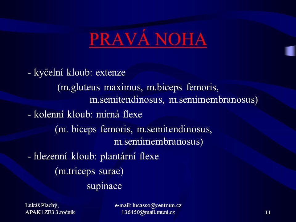 Lukáš Plachý, APAK+ZE3 3.ročník e-mail: lucasso@centrum.cz 136450@mail.muni.cz11 PRAVÁ NOHA - kyčelní kloub: extenze (m.gluteus maximus, m.biceps femo
