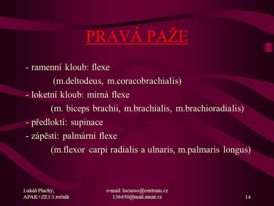 Lukáš Plachý, APAK+ZE3 3.ročník e-mail: lucasso@centrum.cz 136450@mail.muni.cz14 PRAVÁ PAŽE - ramenní kloub: flexe (m.deltodeus, m.coracobrachialis) -