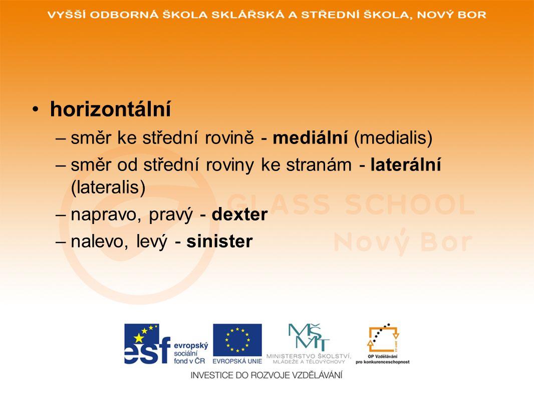 horizontální –směr ke střední rovině - mediální (medialis) –směr od střední roviny ke stranám - laterální (lateralis) –napravo, pravý - dexter –nalevo, levý - sinister