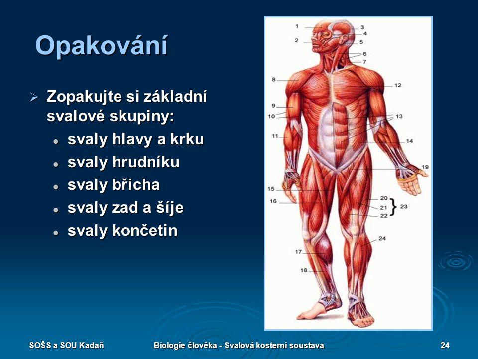 SOŠS a SOU KadaňBiologie člověka - Svalová kosterní soustava24 Opakování  Zopakujte si základní svalové skupiny: svaly hlavy a krku svaly hlavy a krk