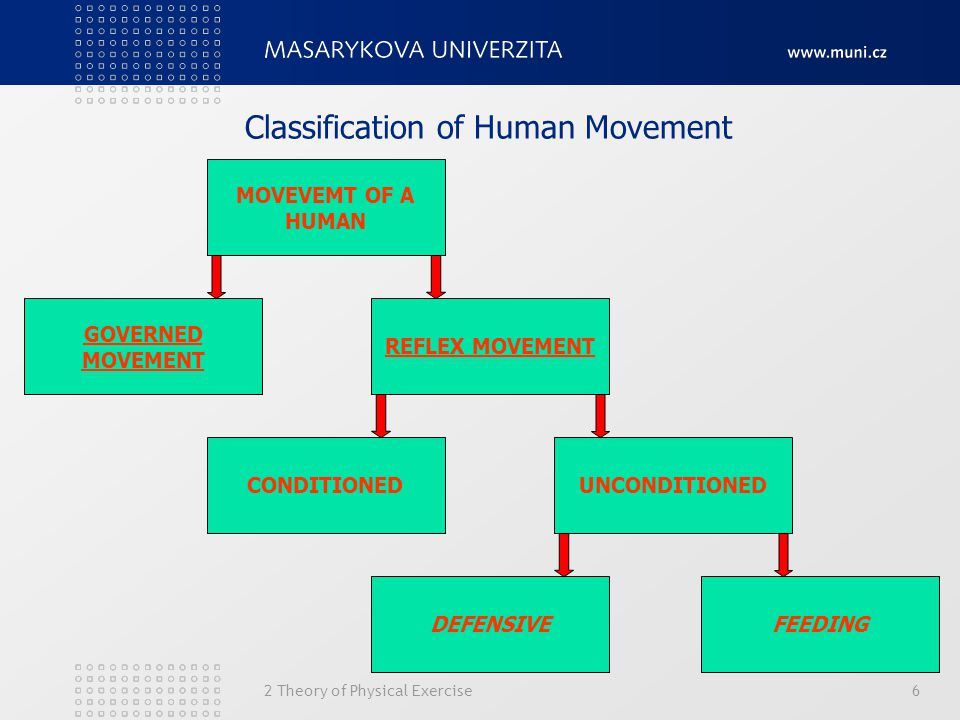 2 Theory of Physical Exercise6 Classification of Human Movement MOVEVEMT OF A HUMAN GOVERNED MOVEMENT REFLEX MOVEMENT CONDITIONEDUNCONDITIONED DEFENSIVEFEEDING
