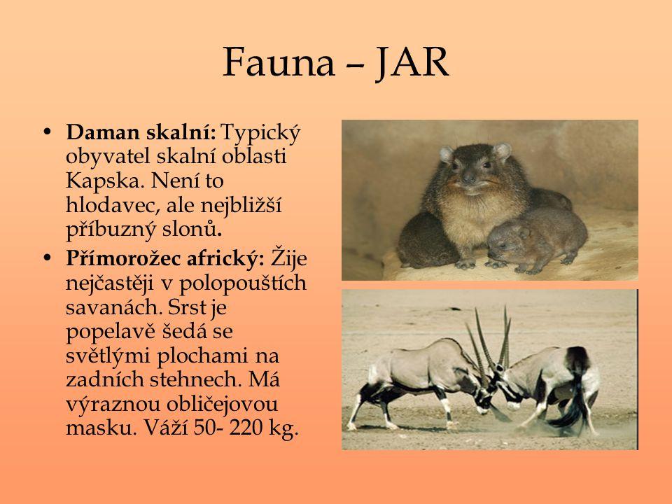 Fauna – JAR Daman skalní: Typický obyvatel skalní oblasti Kapska. Není to hlodavec, ale nejbližší příbuzný slonů. Přímorožec africký: Žije nejčastěji