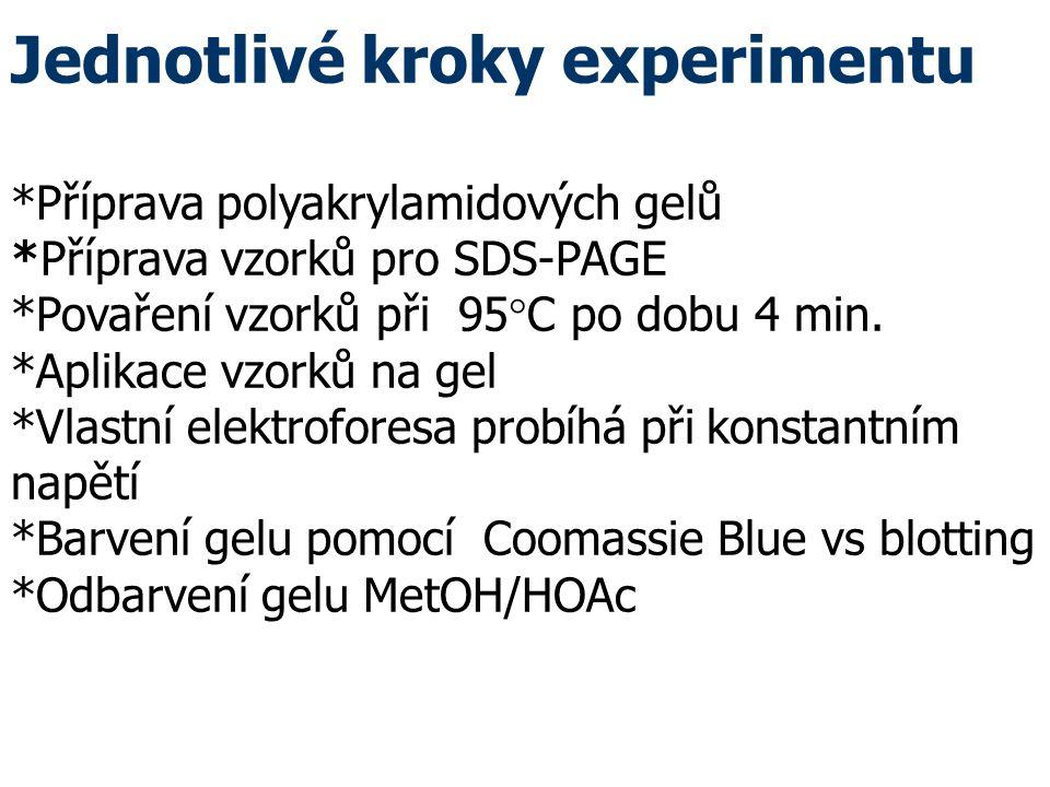Jednotlivé kroky experimentu *Příprava polyakrylamidových gelů *Příprava vzorků pro SDS-PAGE *Povaření vzorků při 95  C po dobu 4 min.