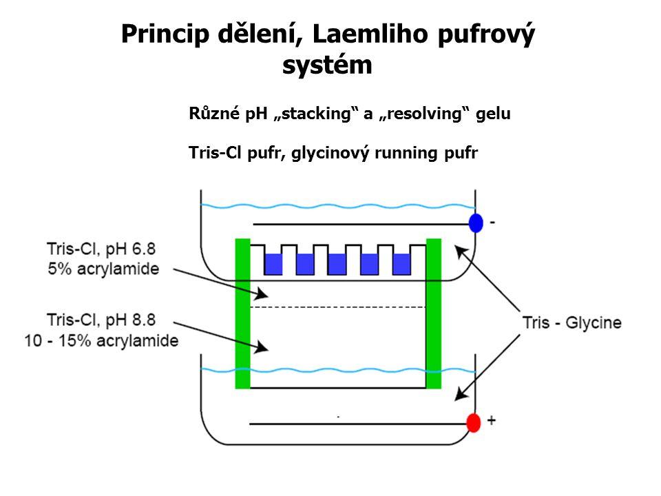 "Princip dělení, Laemliho pufrový systém Různé pH ""stacking a ""resolving gelu Tris-Cl pufr, glycinový running pufr"