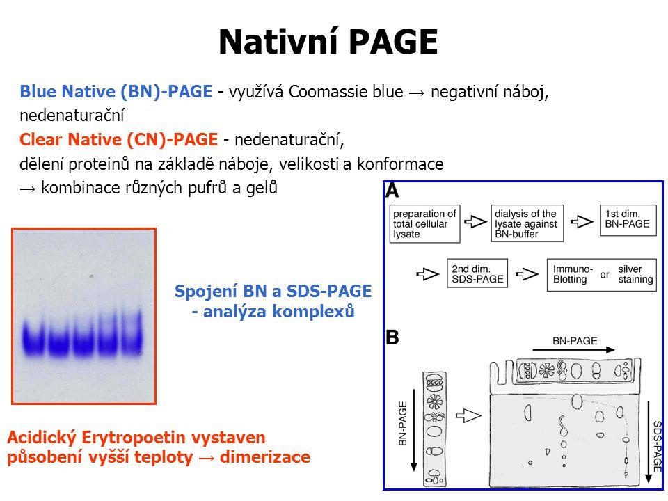 Nativní PAGE Blue Native (BN)-PAGE - využívá Coomassie blue → negativní náboj, nedenaturační Clear Native (CN)-PAGE - nedenaturační, dělení proteinů na základě náboje, velikosti a konformace → kombinace různých pufrů a gelů Acidický Erytropoetin vystaven působení vyšší teploty → dimerizace Spojení BN a SDS-PAGE - analýza komplexů