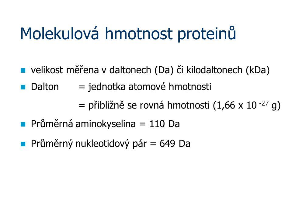 Molekulová hmotnost proteinů velikost měřena v daltonech (Da) či kilodaltonech (kDa) Dalton = jednotka atomové hmotnosti = přibližně se rovná hmotnosti (1,66 x 10 -27 g) Průměrná aminokyselina = 110 Da Průměrný nukleotidový pár = 649 Da