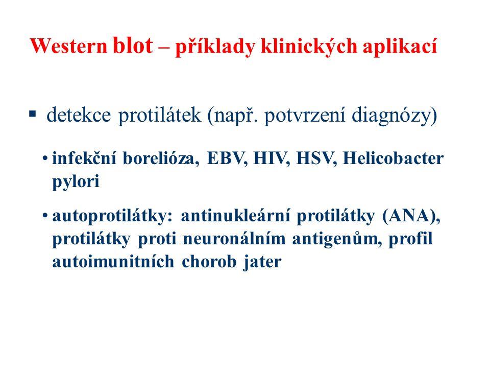 Western blot – příklady klinických aplikací  detekce protilátek (např. potvrzení diagnózy) infekční borelióza, EBV, HIV, HSV, Helicobacter pylori aut