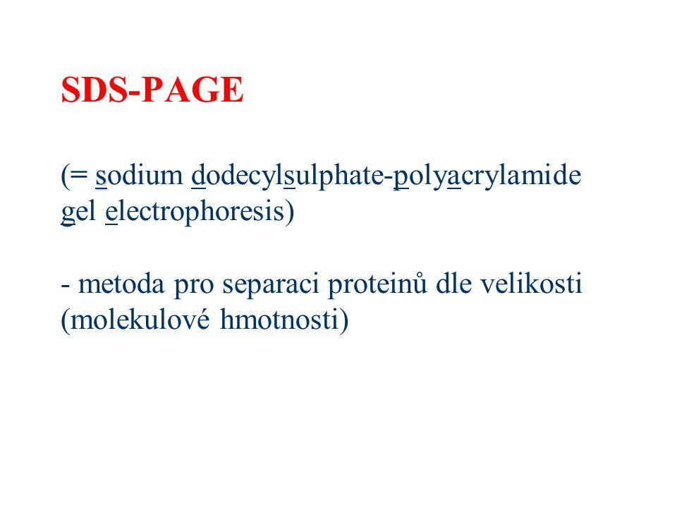 s SDS-PAGE (= sodium dodecylsulphate-polyacrylamide gel electrophoresis) - metoda pro separaci proteinů dle velikosti (molekulové hmotnosti)