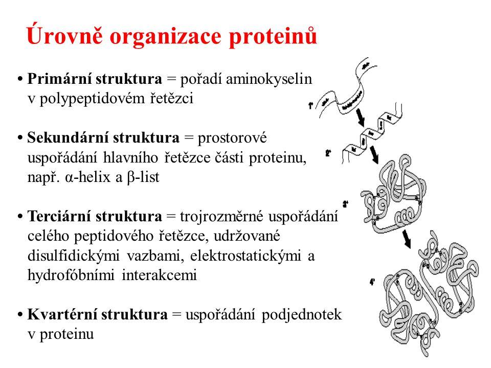 Úrovně organizace proteinů Primární struktura = pořadí aminokyselin v polypeptidovém řetězci Sekundární struktura = prostorové uspořádání hlavního řet