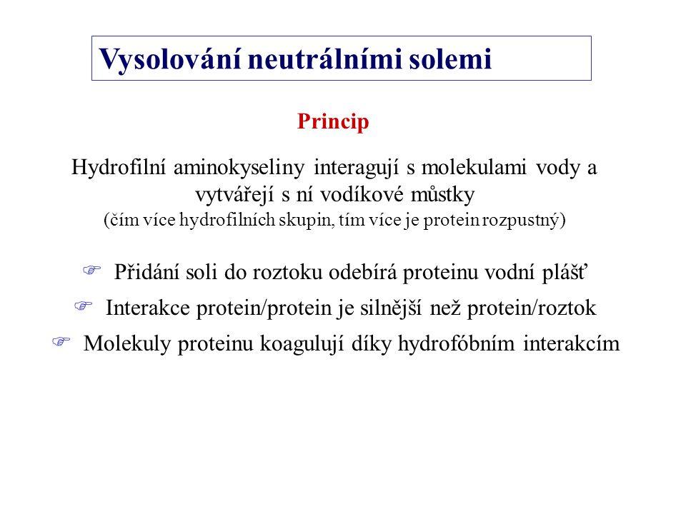 Vysolování neutrálními solemi Princip Hydrofilní aminokyseliny interagují s molekulami vody a vytvářejí s ní vodíkové můstky (čím více hydrofilních skupin, tím více je protein rozpustný)  Přidání soli do roztoku odebírá proteinu vodní plášť  Interakce protein/protein je silnější než protein/roztok  Molekuly proteinu koagulují díky hydrofóbním interakcím