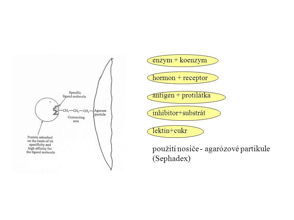 enzym + koenzym hormon + receptor antigen + protilátka inhibitor+substrát lektin+cukr použití nosiče - agarózové partikule (Sephadex)