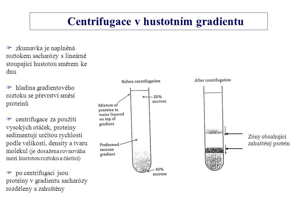 Centrifugace v hustotním gradientu Zóny obsahující zahuštěný protein  zkumavka je naplněná roztokem sacharózy s lineárně stoupající hustotou směrem ke dnu  hladina gradientového roztoku se převrství směsí proteinů  centrifugace za použití vysokých otáček, proteiny sedimentují určitou rychlostí podle velikosti, density a tvaru molekul (je dosažena rovnováha mezi hustotou roztoku a částicí)  po centrifugaci jsou proteiny v gradientu sacharózy rozděleny a zahuštěny