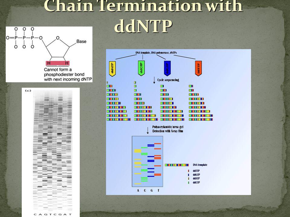 Sekvenování nukleových kyselin Určení sekvence (pořadí) nukleotidů úseků DNA a RNAo několika stech bazí se provádí nejčastěji na principu konvenční Sangerovy metody (dideo-xynukleotidová, ddNTP reakce) nebo nověji pomocí cyklického sekvenování na termocykleru bez nutnosti alkalické denaturace.
