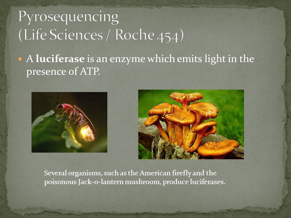 A luciferase is an enzyme which emits light in the presence of ATP. Several organisms, such as the American firefly and the poisonous Jack-o-lantern m