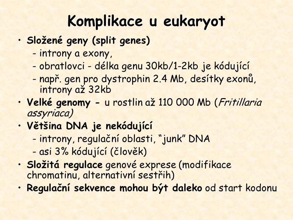Komplikace u eukaryot Složené geny (split genes) - introny a exony, - obratlovci - délka genu 30kb/1-2kb je kódující - např. gen pro dystrophin 2.4 Mb