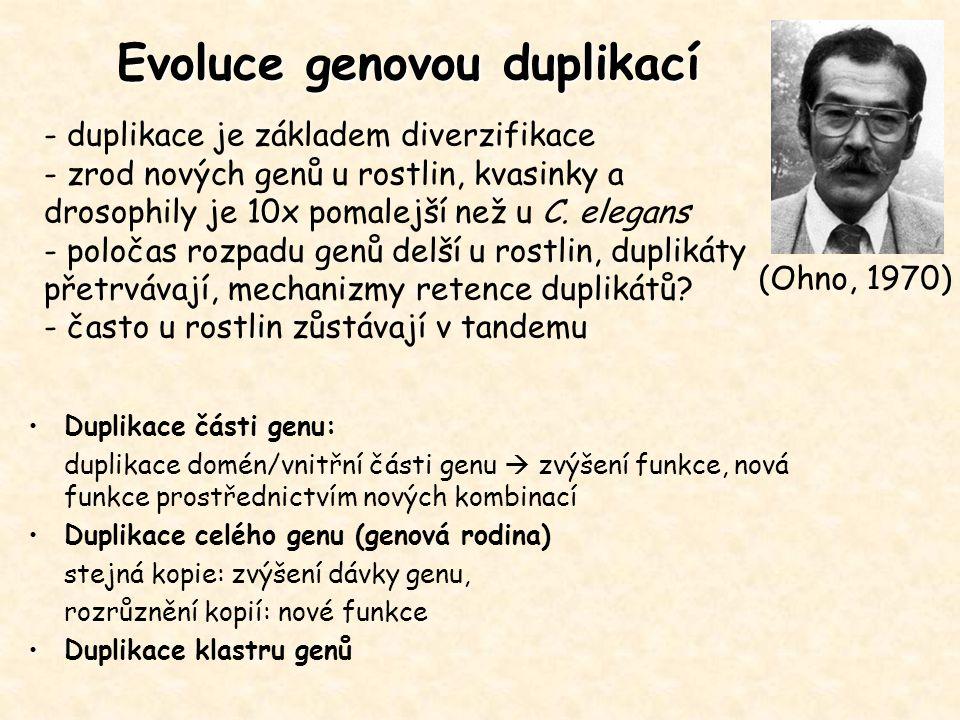 Evoluce genovou duplikací - duplikace je základem diverzifikace - zrod nových genů u rostlin, kvasinky a drosophily je 10x pomalejší než u C. elegans