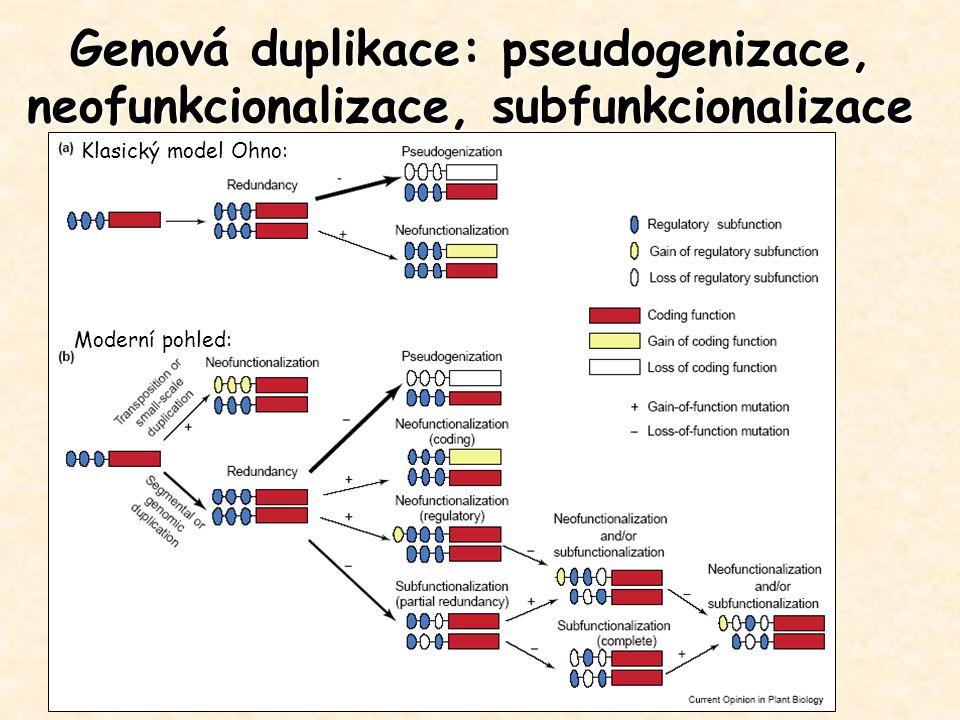 Genová duplikace: pseudogenizace, neofunkcionalizace, subfunkcionalizace Klasický model Ohno: Moderní pohled: